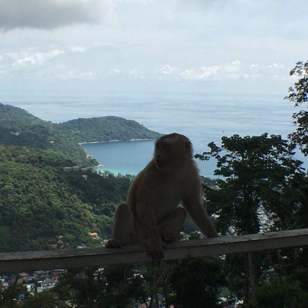 Phuket monkeys